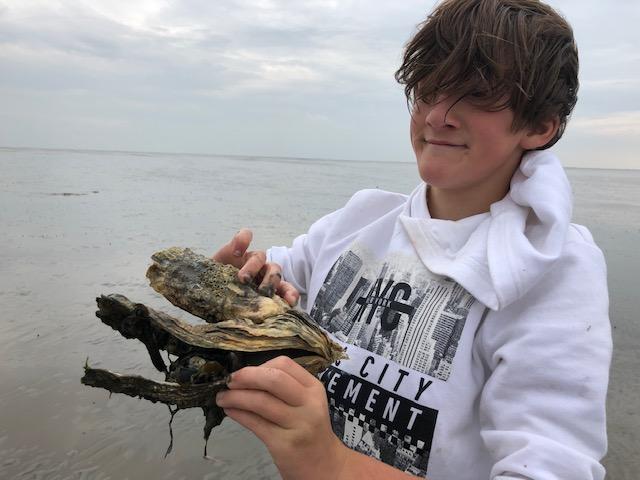 klipper nova Cura oesters zoeken wad