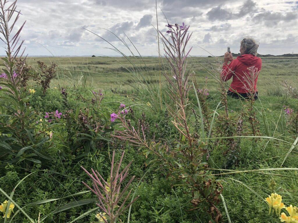 Judith kijkt uit over de oostpunt van Schiermonnikoog met bloemen op voorgrond kwelder