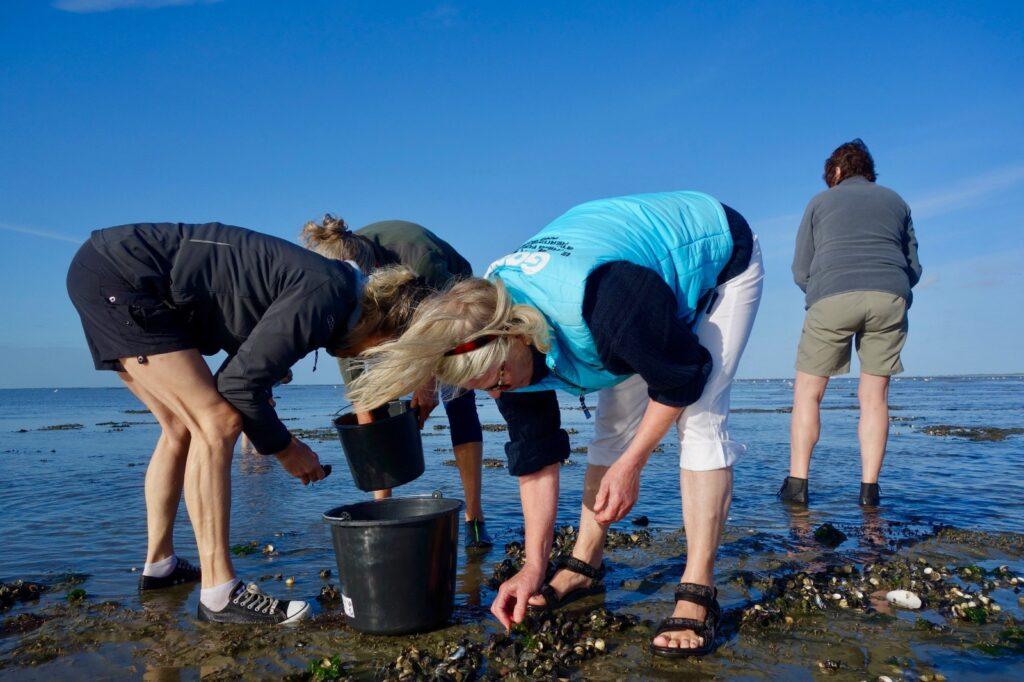 Mosselen rapen op een zandbank bij Ameland, drooggevallen met de klipper nova cura